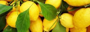 amalfi-lemons