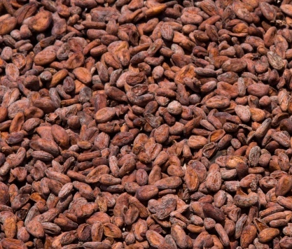 Cocoa-Beans1