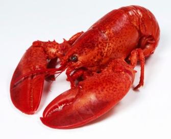 lobster1